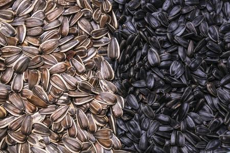 semillas de girasol: dos tipos semillas de girasol fondo, la textura