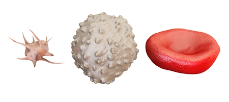 blood cells erythrocyte, lymphocyte, thrombocyte, 3D rendering isolated on white background