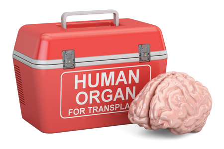 Portable fridge for transporting donor organs with human brain, 3D rendering