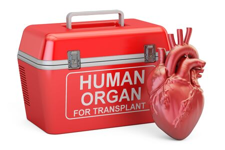 Portable fridge for transporting donor organs with human heart, 3D rendering Stock Photo