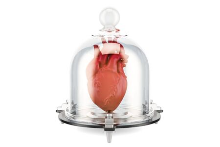 Human heart covered by glass bell, health insurance concept. 3D rendering Stock Photo