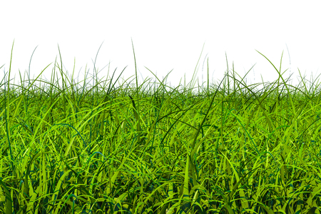 Green grass, 3D rendering isolated on white background Stock Photo