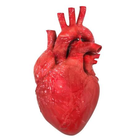 Realistisches menschliches Herzorgan mit Aorta und Arterien, 3D-Rendering auf weißem Hintergrund