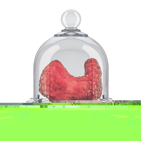 Human thyroid covered by glass bell, protect concept. 3D rendering isolated on white background