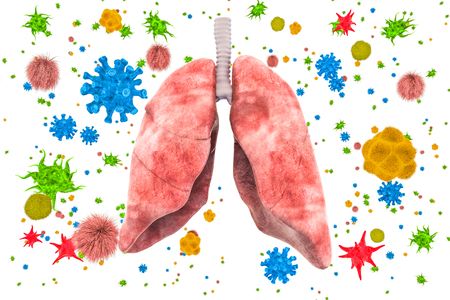 Lungs with viruses and bacteria. Lungs disease, infection concept, 3D rendering isolated on white background