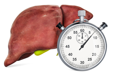 Human liver with stopwatch. First aid and treatment of liver concept, 3D rendering isolated on white background Imagens