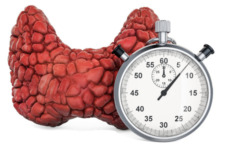 Human thyroid with stopwatch. First aid and diagnosis of thyroid gland concept, 3D rendering isolated on white background