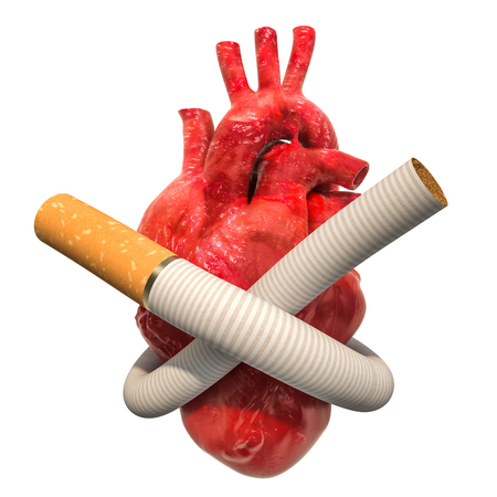 Heart disease from smoking, concept. Cigarette tied in a knot around human heart. 3D rendering isolated on white background