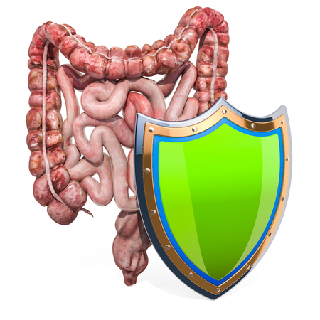 Human intestines with shield, bowel protection from diseases concept. 3D rendering isolated on white background