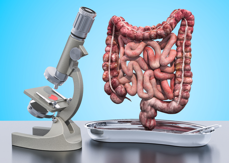 Research and diagnostics of bowel disease concept. Laboratory microscope with human intestines , 3D rendering isolated on white background