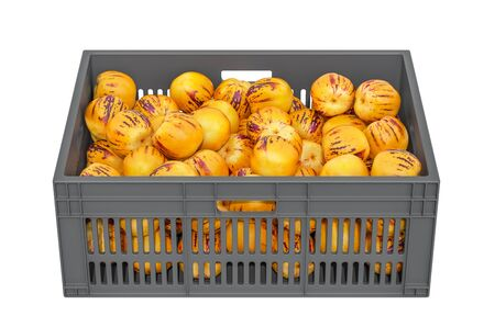 Pepinos in the plastic crate, 3D rendering isolated on white background