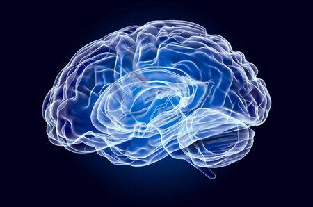 Human Brain, x-ray hologram. 3D rendering on dark blue background Stock Photo
