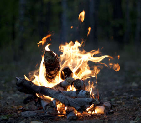 elemental: The hot fire of birch twigs in the forest