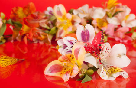 Flowers are a beautiful bright red background in the alstroemeria photo