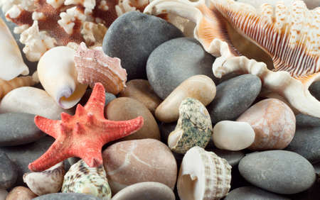 Red starfish with shells on the sea rocks photo