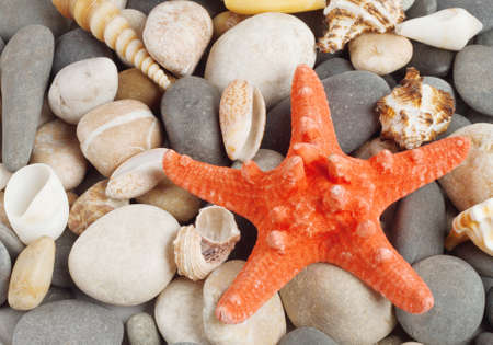 Background of round stones and shells of marine mollusks photo