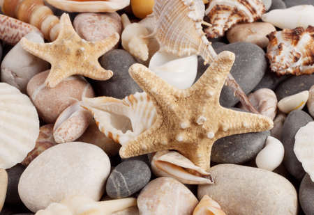 The background of colored stones and shells of marine mollusks photo