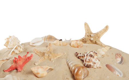 Starfish and seashells on the beach  isolated on white background photo