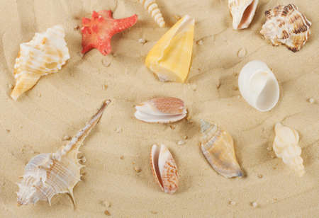 Background with colored shells and starfish on the yellow sand photo