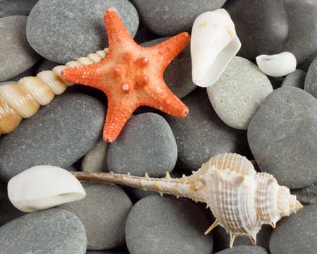 Background to marine mollusks and the star on the shingle Standard-Bild