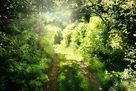 exiting: The road in the green forest exiting to sunlight Stock Photo