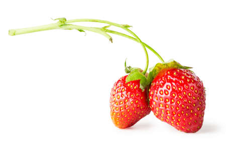 nature beauty: Two berry red strawberry on branch isolated on white