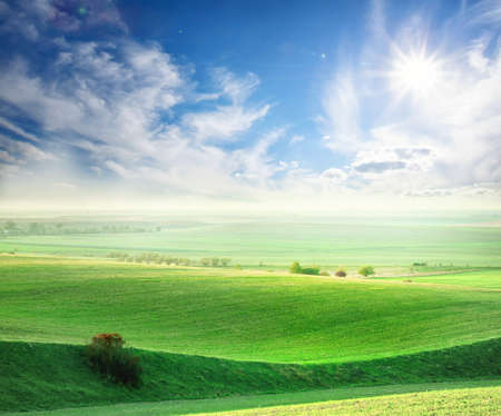 blessedness: Wavy field with green grass under the bright sun