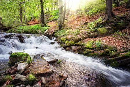 threshold: Threshold on the river flowing in the green forest