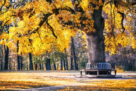 Bench in the park under spreading tree in autumn