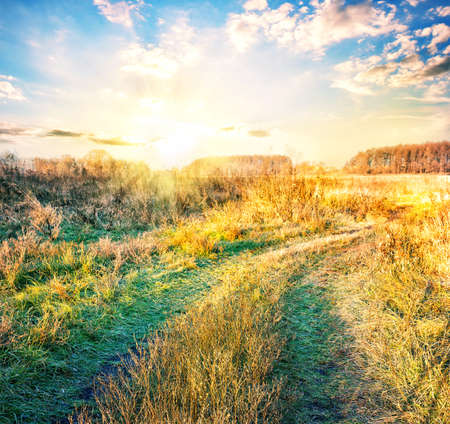 yellowing: Country road in field with yellowing grass at sunset