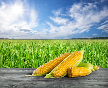 Handful of ripe yellow corn on wooden table