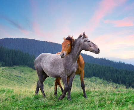 Two horses hugging under pink morning sky Imagens