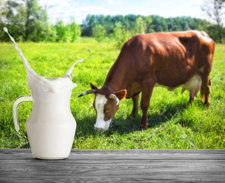A glass jug of milk with splash on the background of cow