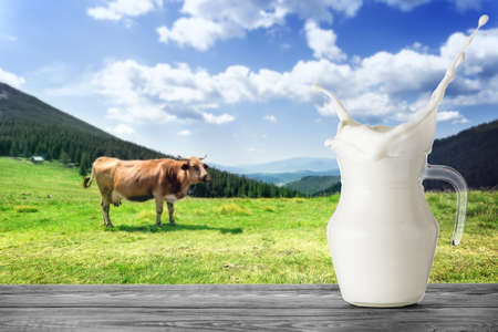 Jug of milk with splash on background of brown cow in mountains