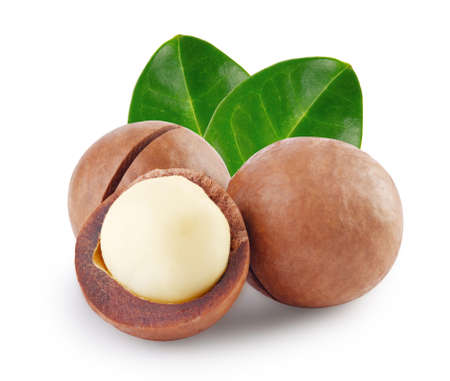 Whole and open australian macadamia nut with two green leaf