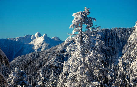 lions peaks from Grouse Mountain Vancouver photo