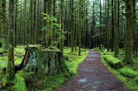 Rain Forest trail in Golden Ears Park British Columbia photo