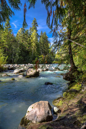 Arm of Cheakamus River - is a stream, running through the stony bottom of a   canyon overgrown   with green forest.
