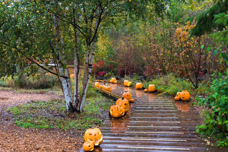 View at a row of Halloween pumpkins along a wooden trail on a rainy autumn day in the nature park in Richmond City