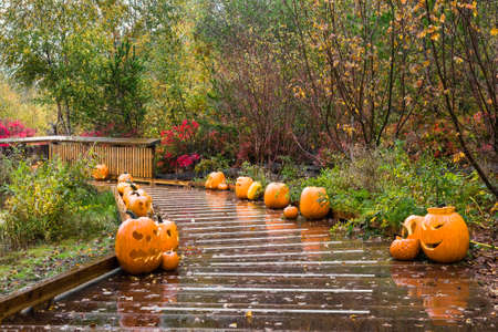View at a row of Halloween pumpkins along a wooden trail on a rainy autumn day in the nature park in Richmond City 免版税图像