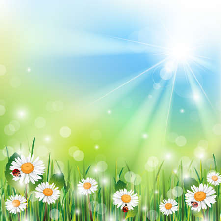 sunbeam background: Spring Background with Grass and Flowers on a Sunny Day