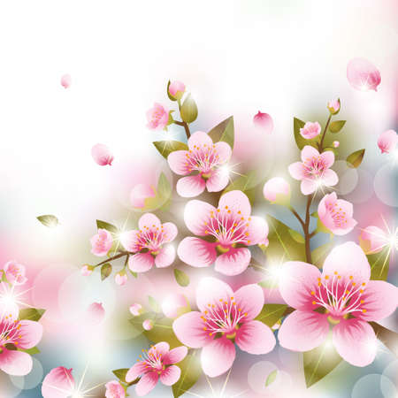 Branches of Cherry Blossoms Illustration