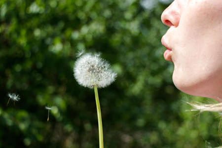 A girl with scarlet lips in the forest, sunny weather deutvanchika flower. Dandelion seeds spread out in the wind.