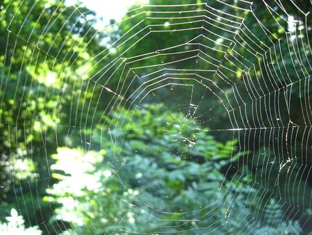 Web in a green forest