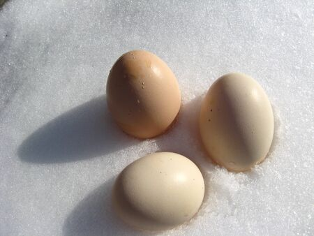 Three eggs of turkey on the snow photo