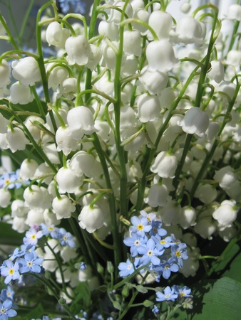 Bouquet of lilies of the valley and blue flowers photo