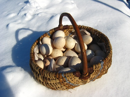 forgetfulness: Basket with eggs of the turkeystanding on a snow  Stock Photo