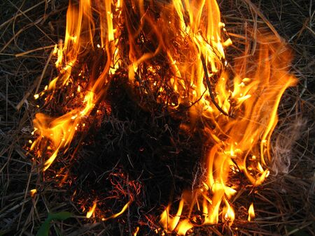 ignited: Fire in the forest Stock Photo