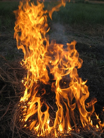 body of flame inflaming in a forest photo