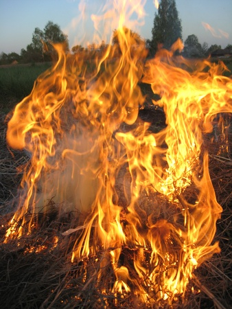 ignited: body of flame inflaming in a forest
